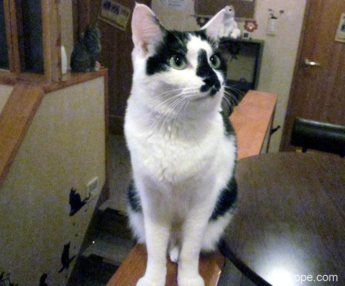 白黒ぶち猫