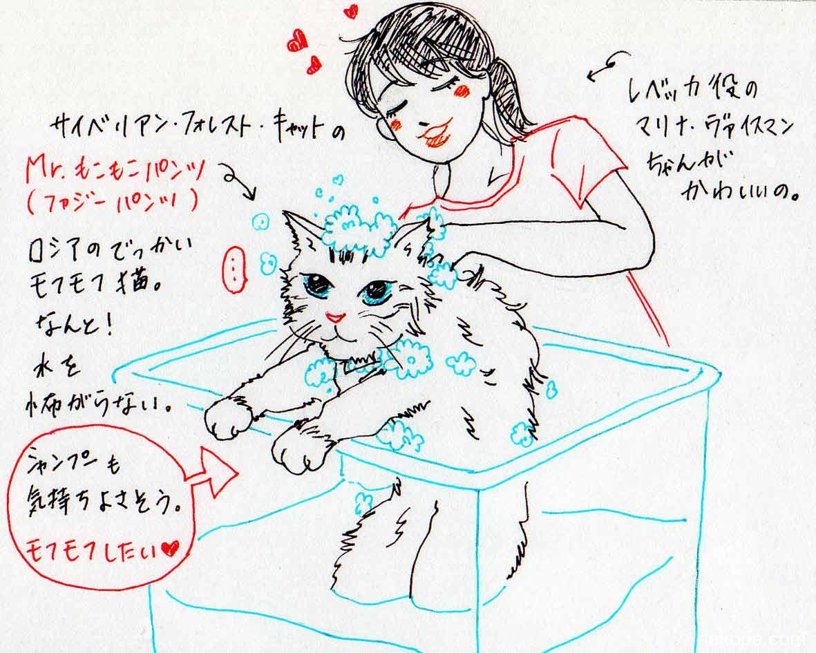 体を洗われる猫