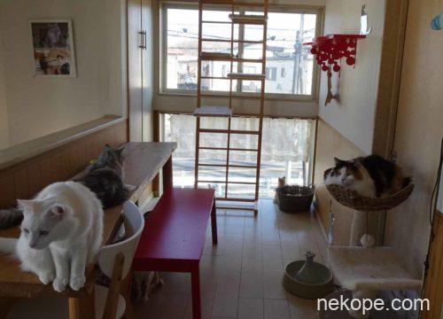 2階の猫カフェ